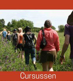 Cursussen